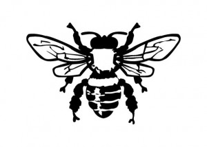 beeillustration